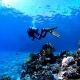 nurkowanie-egipt-3